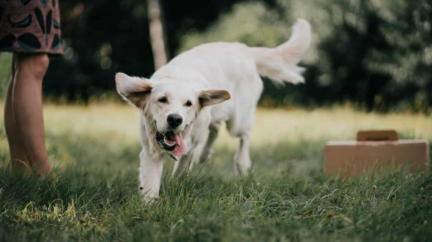 Croquettes pour chiens